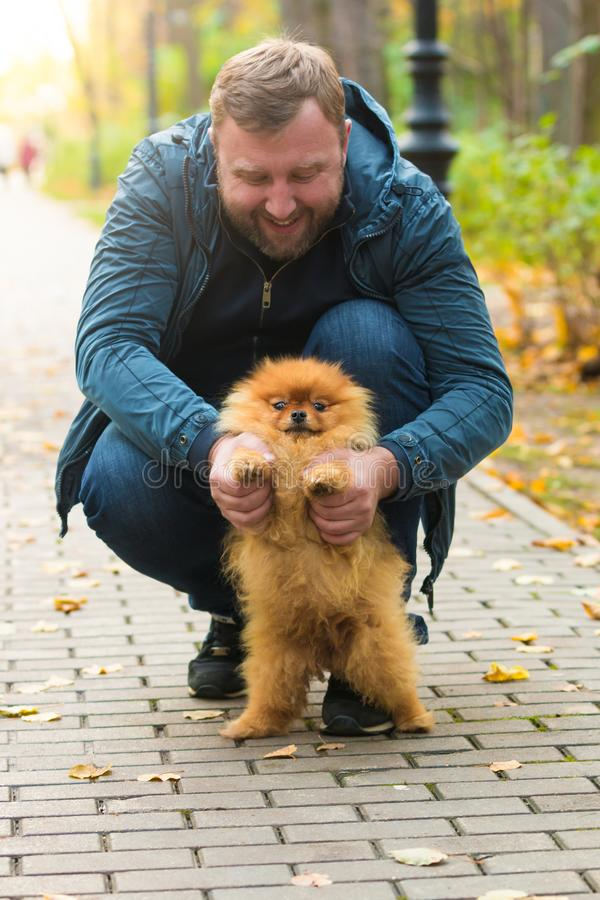 Hombre serio con el perro pomeranian en parque del otoño imagen de archivo