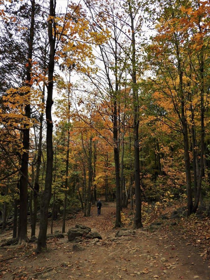 Hombre solo que camina a lo largo de Forest Trail imágenes de archivo libres de regalías