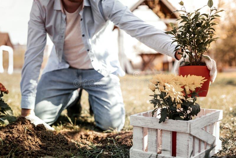 Hombre usando los guantes blancos para cultivar un huerto en casa de verano imagenes de archivo