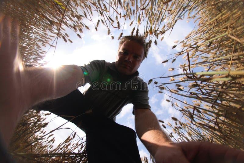 Hombre y el maíz fotos de archivo