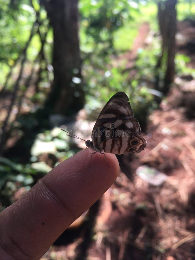 Hombre y mariposa foto de archivo