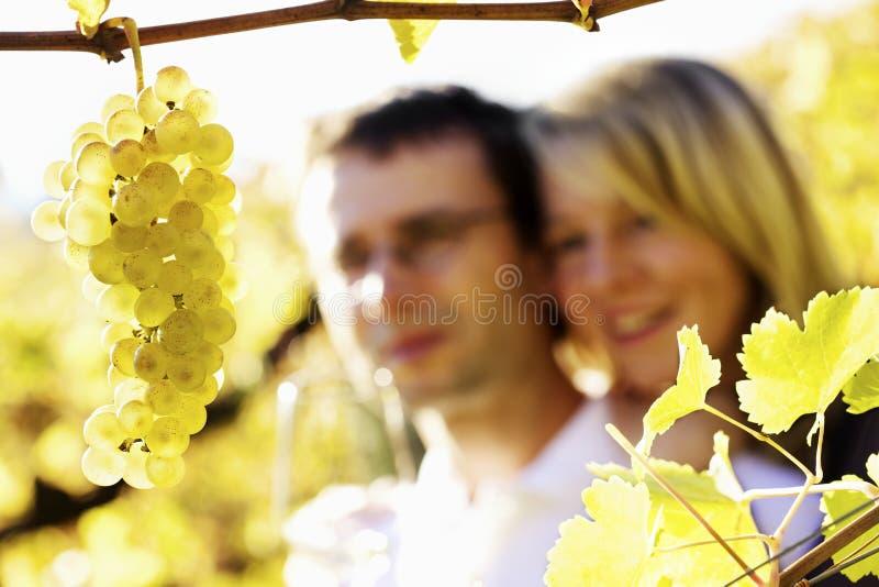 Hombre y mujer felices en viñedo. fotografía de archivo libre de regalías