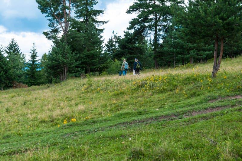 Hombres mayores inidentificables que buscan para las setas cerca de un bosque del pino fotografía de archivo libre de regalías