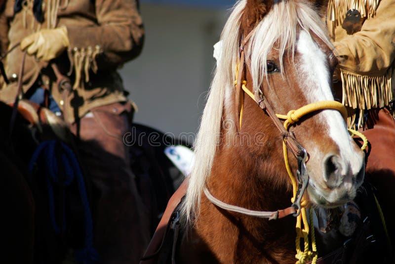 Hombres y caballo del oeste viejos de montaña imagenes de archivo