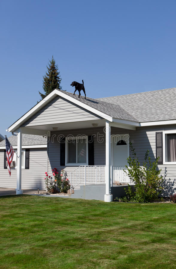 HOME americana com cão fotografia de stock royalty free