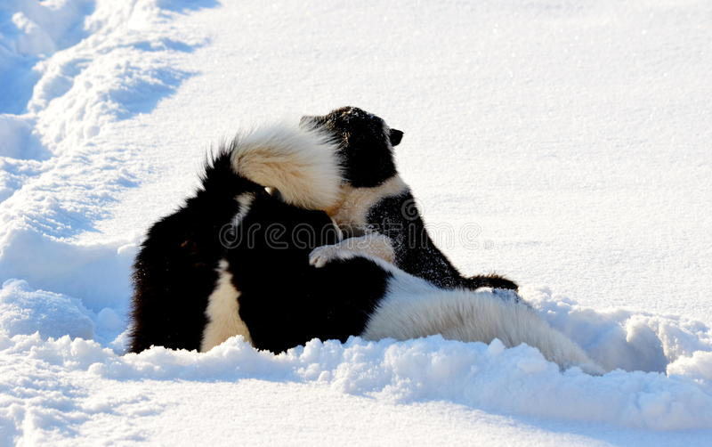 Home animals play. Greater role in lifes of the personn royalty free stock photo