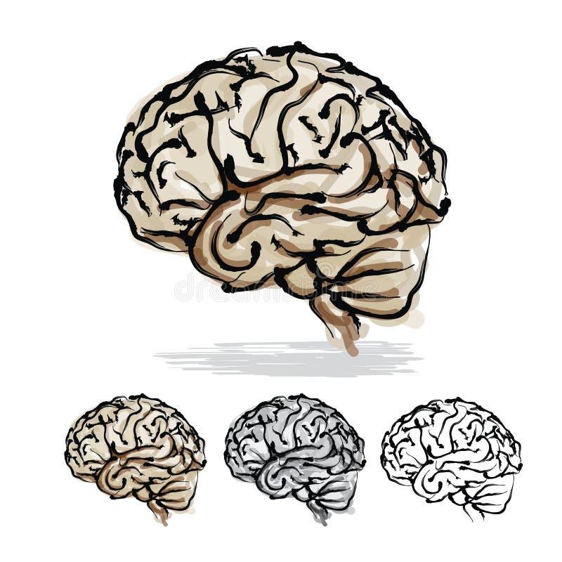 Brain Sketch vector illustration