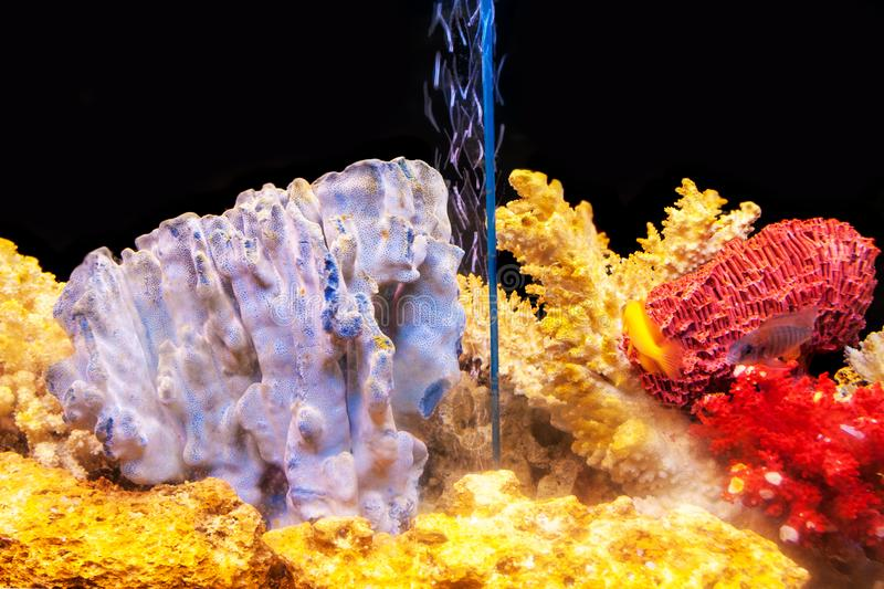 A home aquarium with exotic fishes and multicolored corals stock images