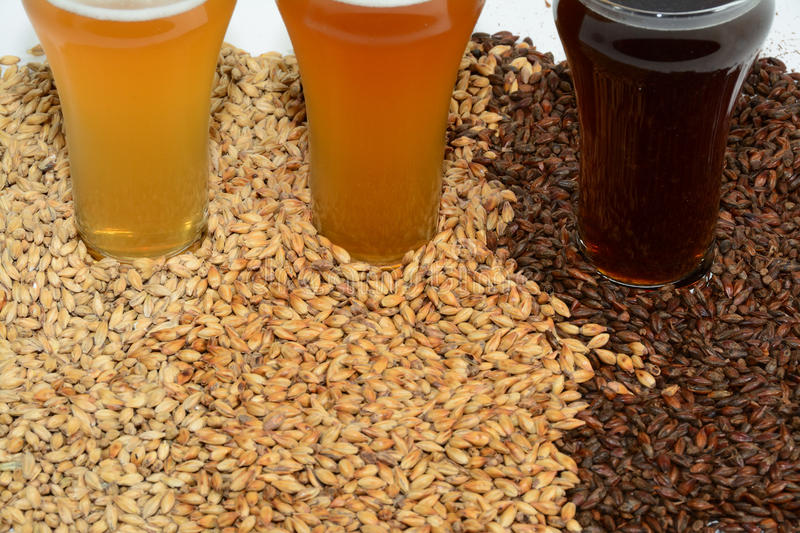 Home brew ingredients of grains and hops. Home brewed beer showing the different color of beer that different grains produce from pale 2 row grain to cara pils stock photography