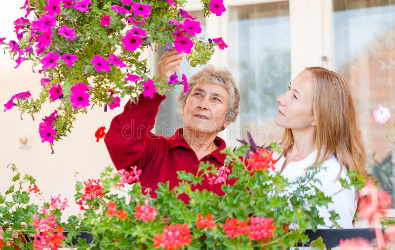Home care. Elderly women shows her flowers to her assistant stock images