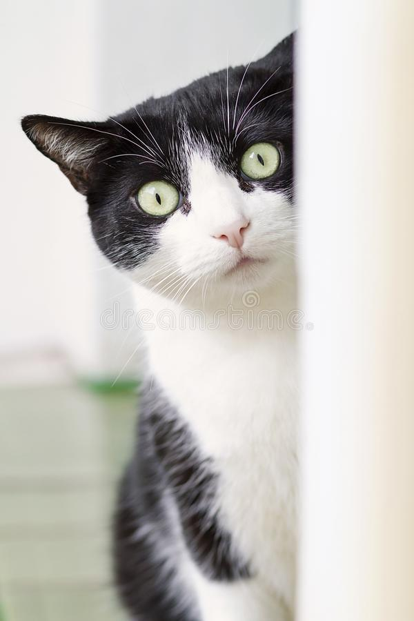 A cat portrait stock image
