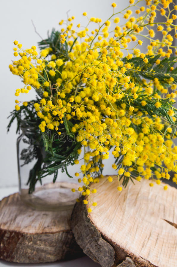 Home Decor, Brunch Of Beautiful Mimosa Yellow Spring Flowers In Vase ...