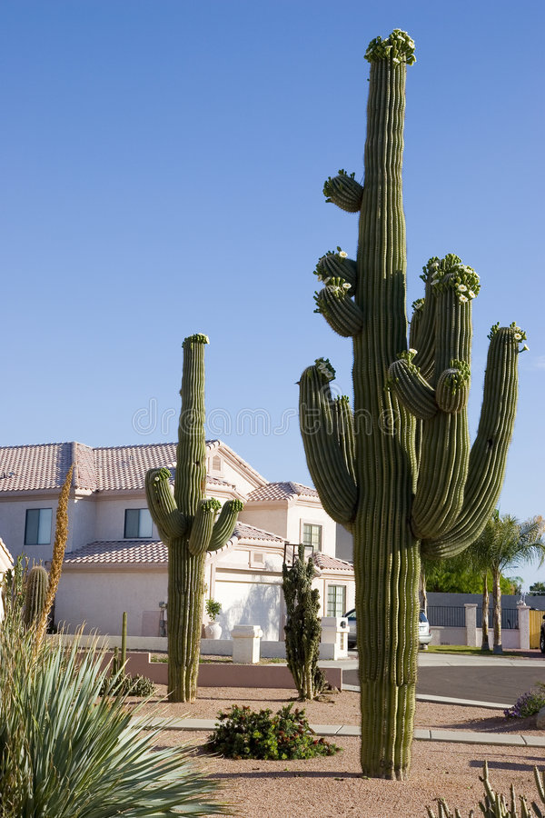 HOME e Saguaro do Arizona fotografia de stock