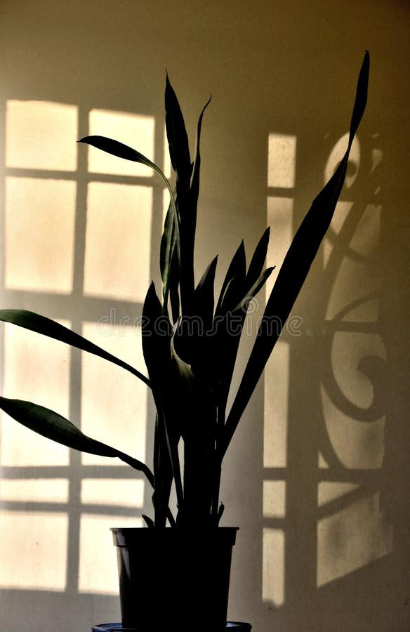 Free Home Flower And Shadow. Stock Photos - 84622243