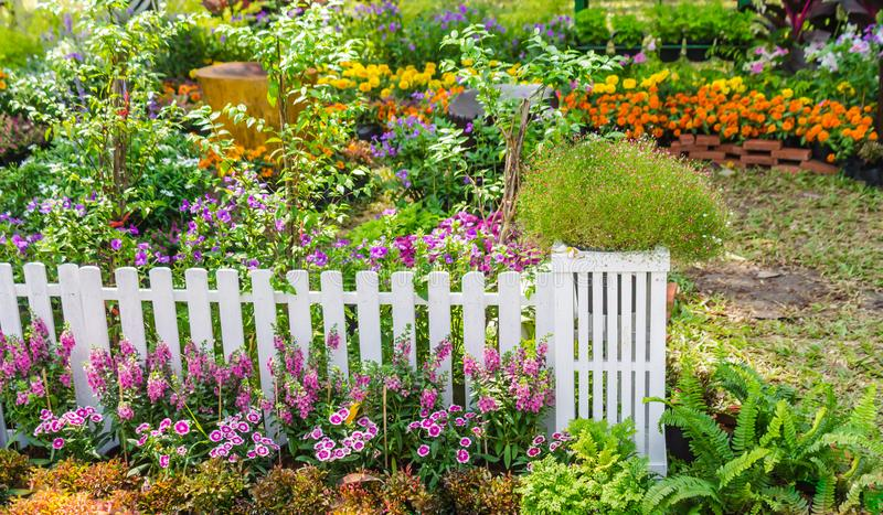 In home garden. Home flowers garden on summer stock photo