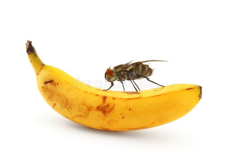 Home fly sitting on banana