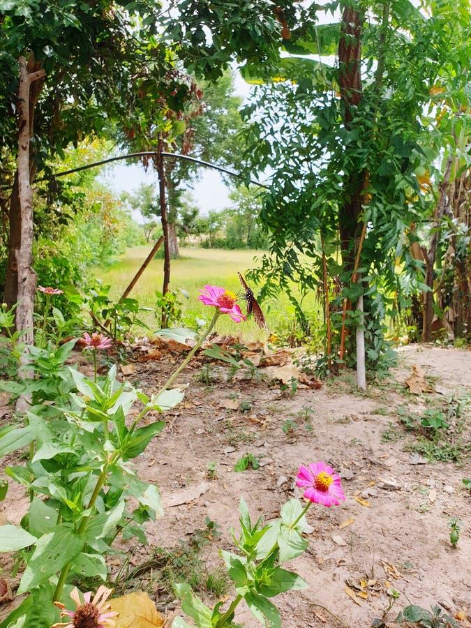 Home garden in thailand. stock photos