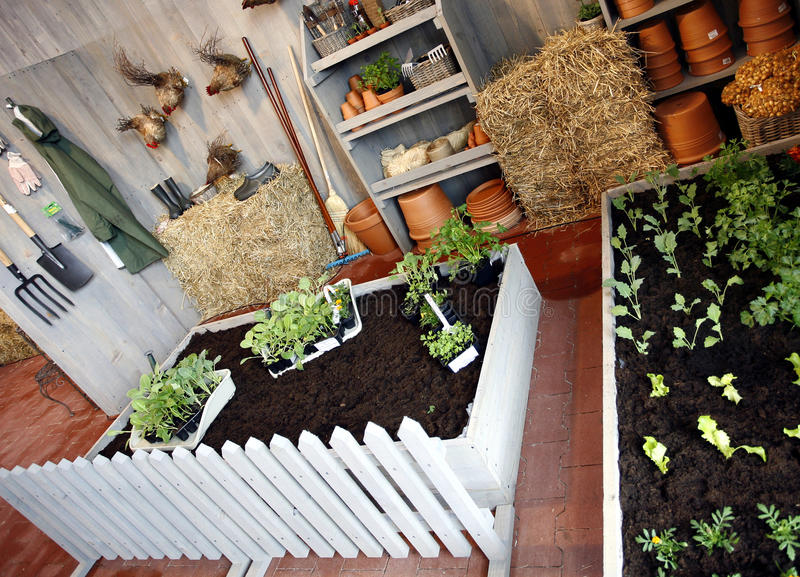 Home gardening royalty free stock image