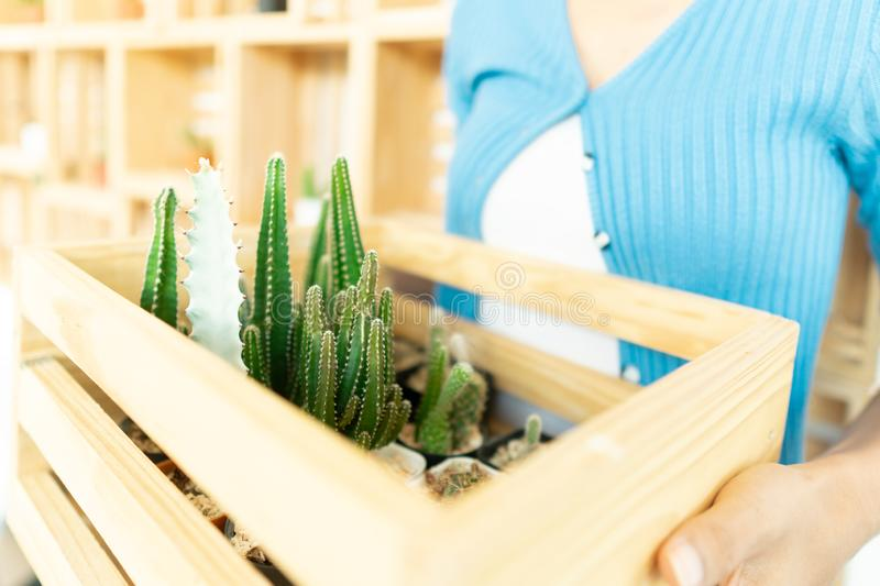 Home gardening with cactus plants stock photos