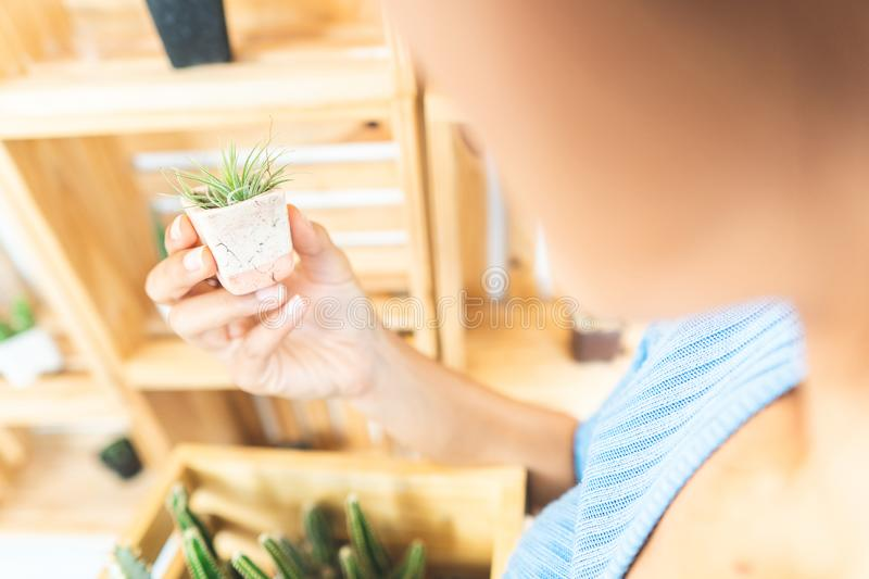 Home gardening with cactus plants. stock photo