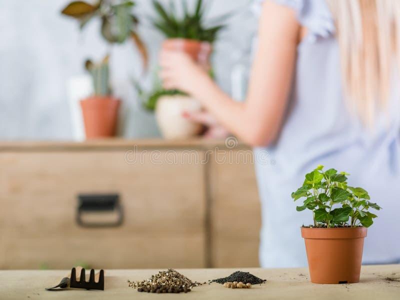 Home gardening plant transplantation flowerpot stock image