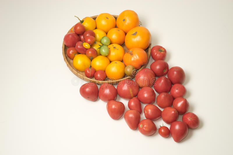 Home grown tomato harves in colors royalty free stock photography