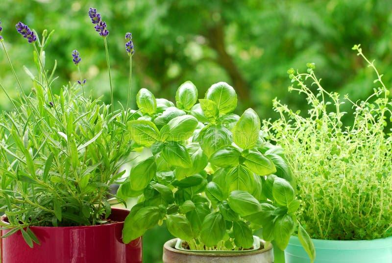 Home Herb`s Garden Royalty Free Stock Photos