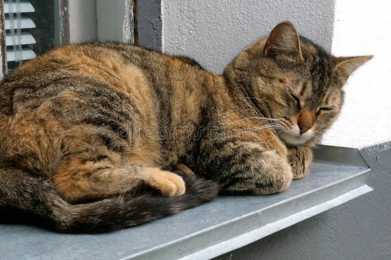 Home or homeless cat lies on the windowsill at home, squinting and going to sleep. Soft focus. Close-up stock photo