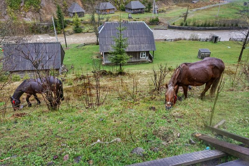Home horse grazes on a green lawn in the mountains. Home horse grazes on a green lawn in the mountains stock photography
