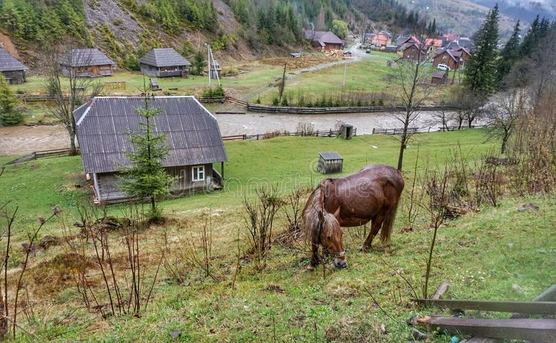 Home horse grazes on a green lawn in the mountains. Home horse grazes on a green lawn in the mountains royalty free stock photography