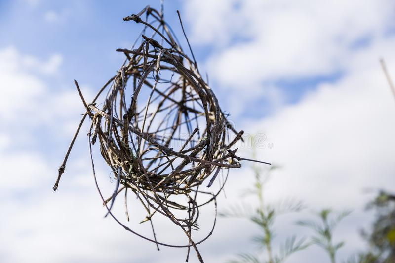 Home Made Spheric Twig Hanging Garden Decorations stock photo