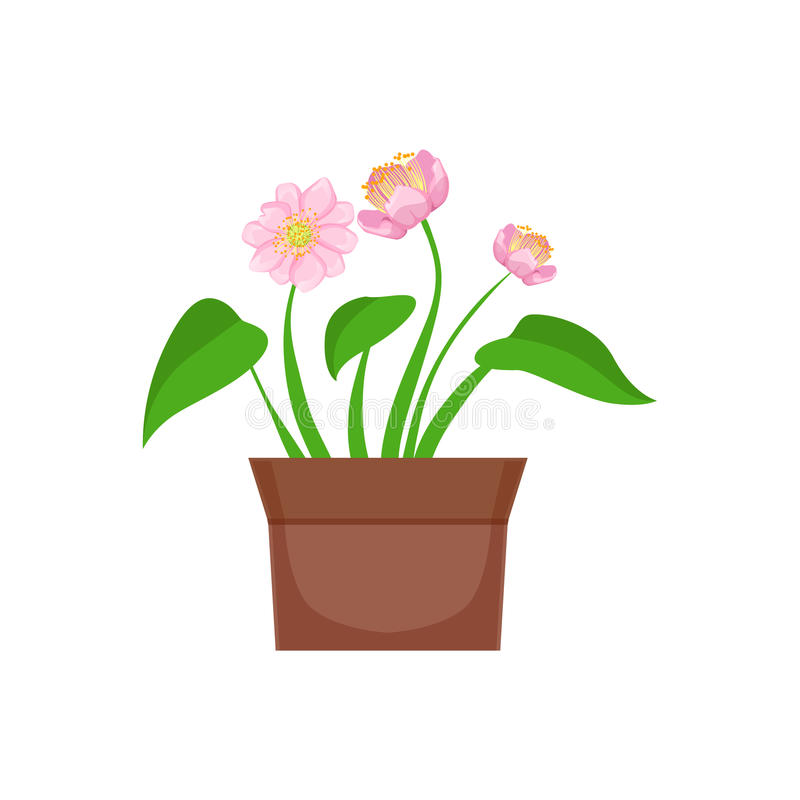 Home Pink Flower With Heart Shape Leaves In The Flowerpot, Flower Shop Decorative Plants Assortment Item Cartoon Vector vector illustration