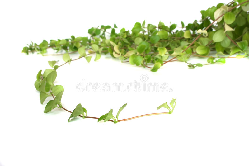 Home plant. With blurred background stock photo