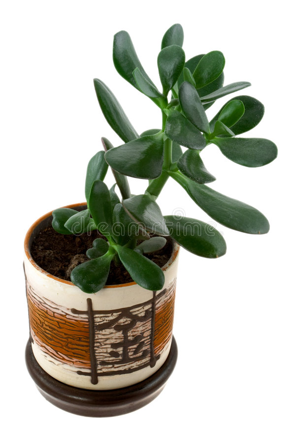 Download Home plant in flowerpot stock image. Image of closeup - 3971859