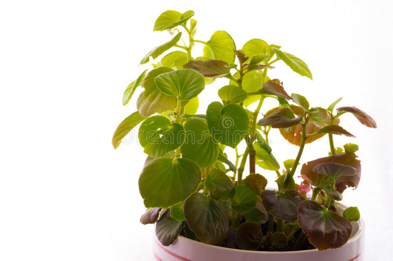 Home plant royalty free stock images