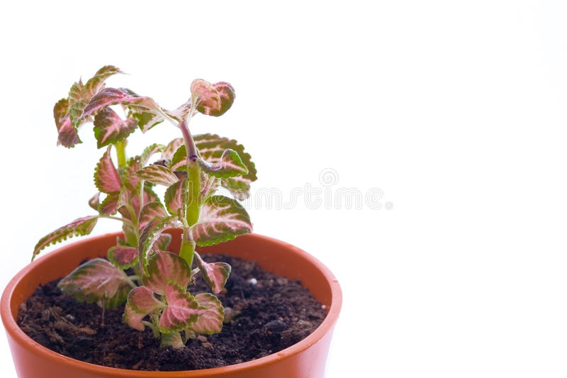 Home plant royalty free stock photos