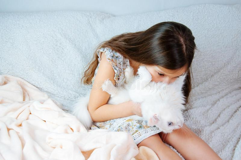 Home portrait of a little cute girl with a white cat Felis catus with blue eyes on a soft sofa royalty free stock photo