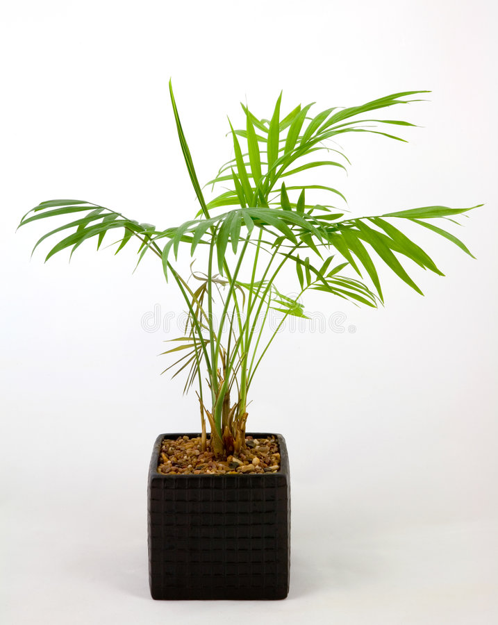 Home pot plant stock images