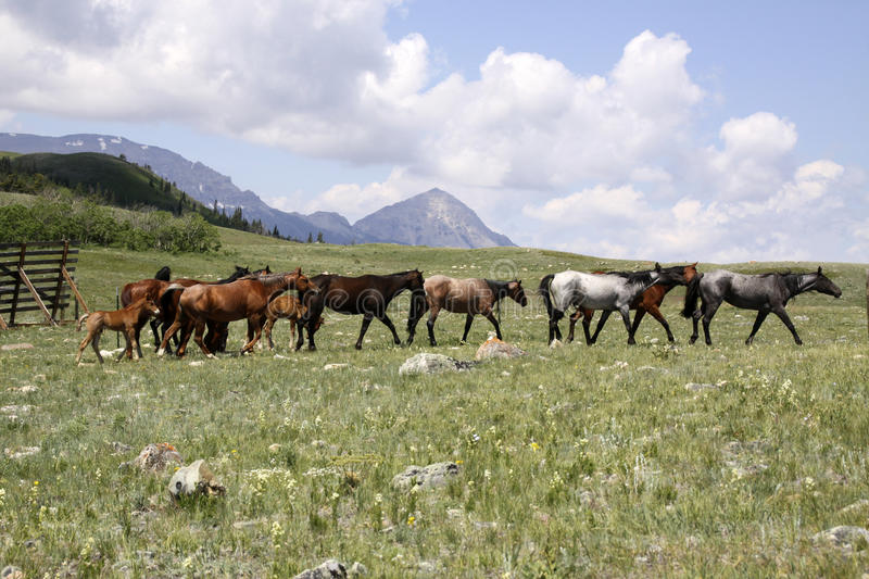 Download Home on the Range stock image. Image of scenic, mare - 10214431