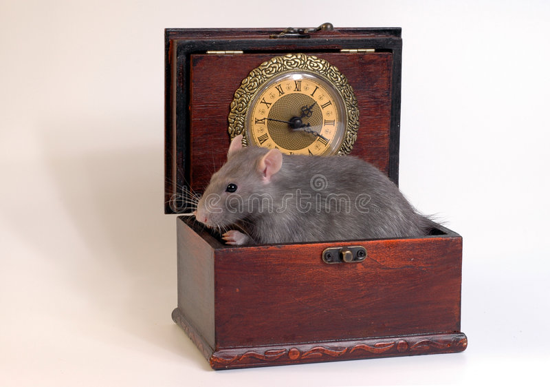 Download Home Rat Sitting In Wooden Case Stock Photo - Image of casket, chest: 466422