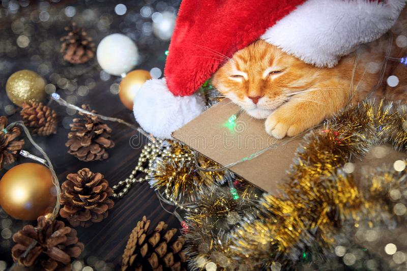 Home red cat sleeps in a box with Christmas decorations. The concept of New Year and Christmas holidays. Home red cat sleeps in a box with Christmas decorations stock images