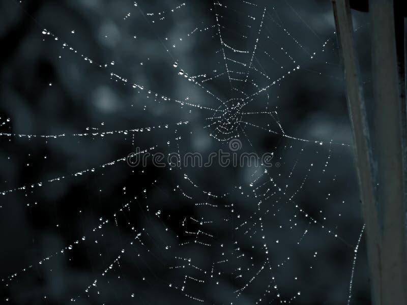 Download Home s-spiderman fotografering för bildbyråer. Bild av cobweb - 280769