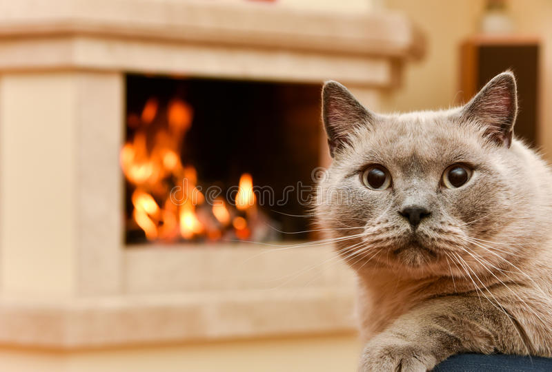 Home spirit. Cat by the fireplace stock photo