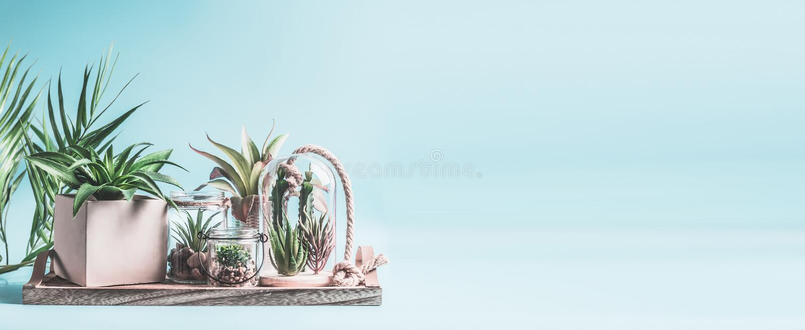 Home succulent garden. Green house plants in pots, glass terrarium and jars on table at pastel pink background. Various succulent royalty free stock photo