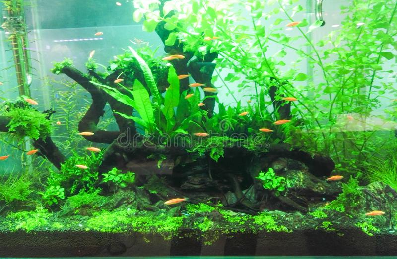 fish tank aquarium stock images