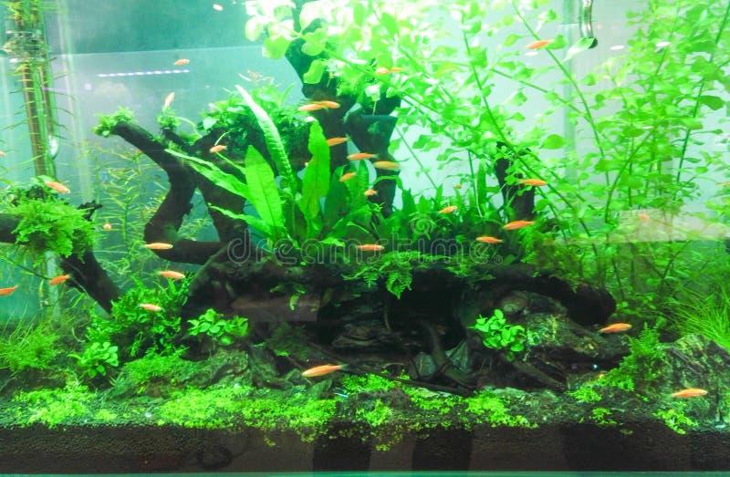Home tropiskt fiskbeh?llareakvarium arkivbilder