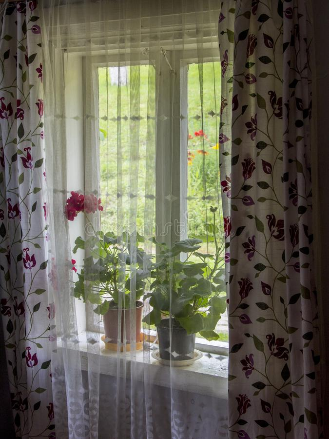 Home window flowers decor stock photography