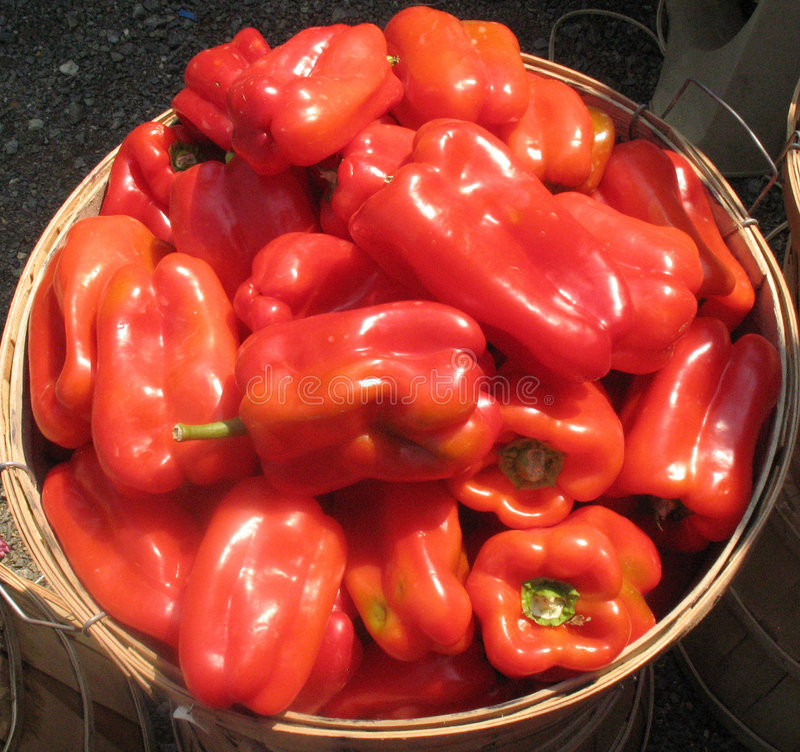 Homegrown sweet red peppers royalty free stock image