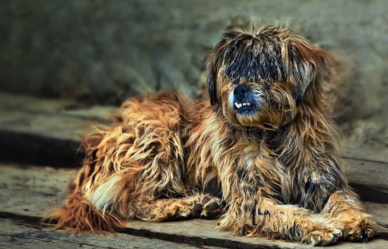 homeless собаки стоковое фото rf