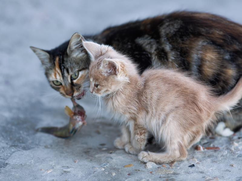 Cute kitten and mother cat on concrete pier in sea port stock images